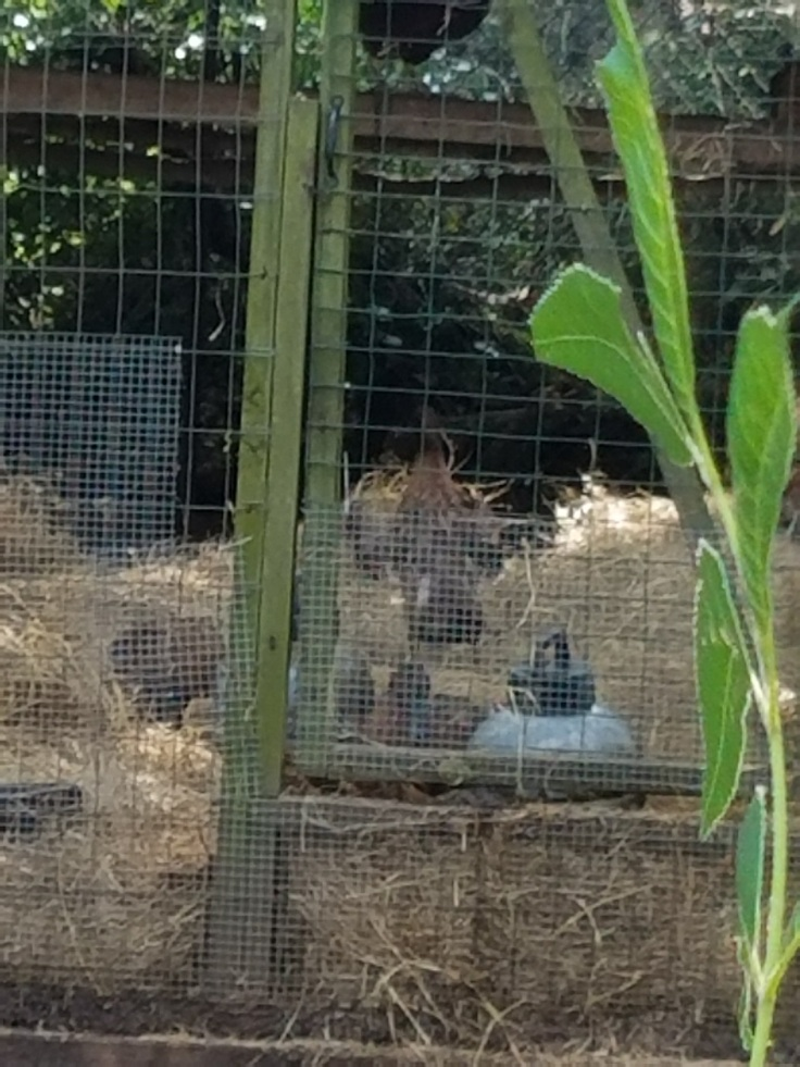 birds hay
